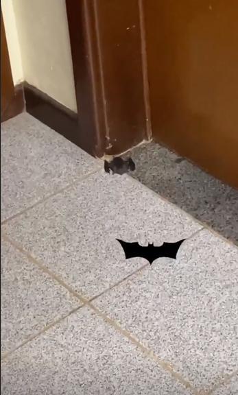 Graciele Lacerda encontra morcego em casa